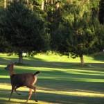 15th oh, deer